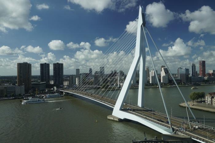 Rotterdam – Gestählter Schwan am Wilhelminapier
