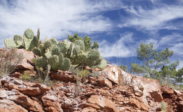 Tag 25 – Ausflug nach Sedona und Nachtprogramm: Von Flagstaff nach LosAngeles