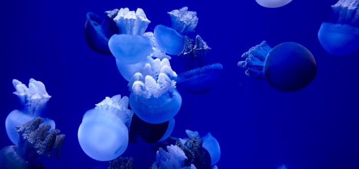 Tag 11 –Oceanográfico