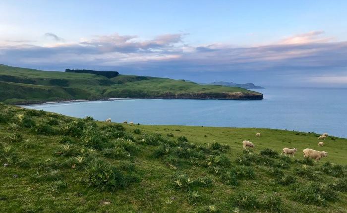 Tag 22 – Dunedin/ Otago Peninsula:Wildlife