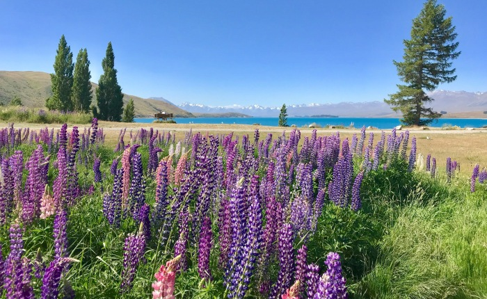 Tag 34 – Von Lake Tekapo nach Christchurch
