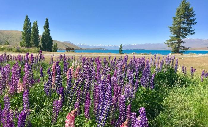 Tag 34 – Von Lake Tekapo nachChristchurch