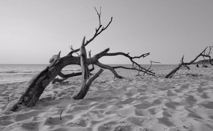 "Umweltfotofestival ""horizonte zingst"" 2018 – TeilII"