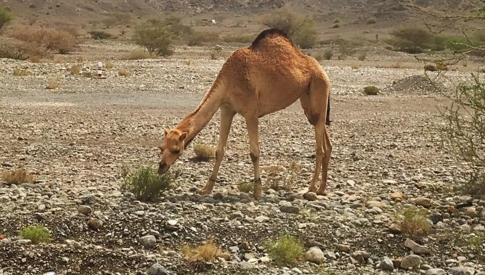 Tag 18: Nizwa – Muscat –Zieleinlauf