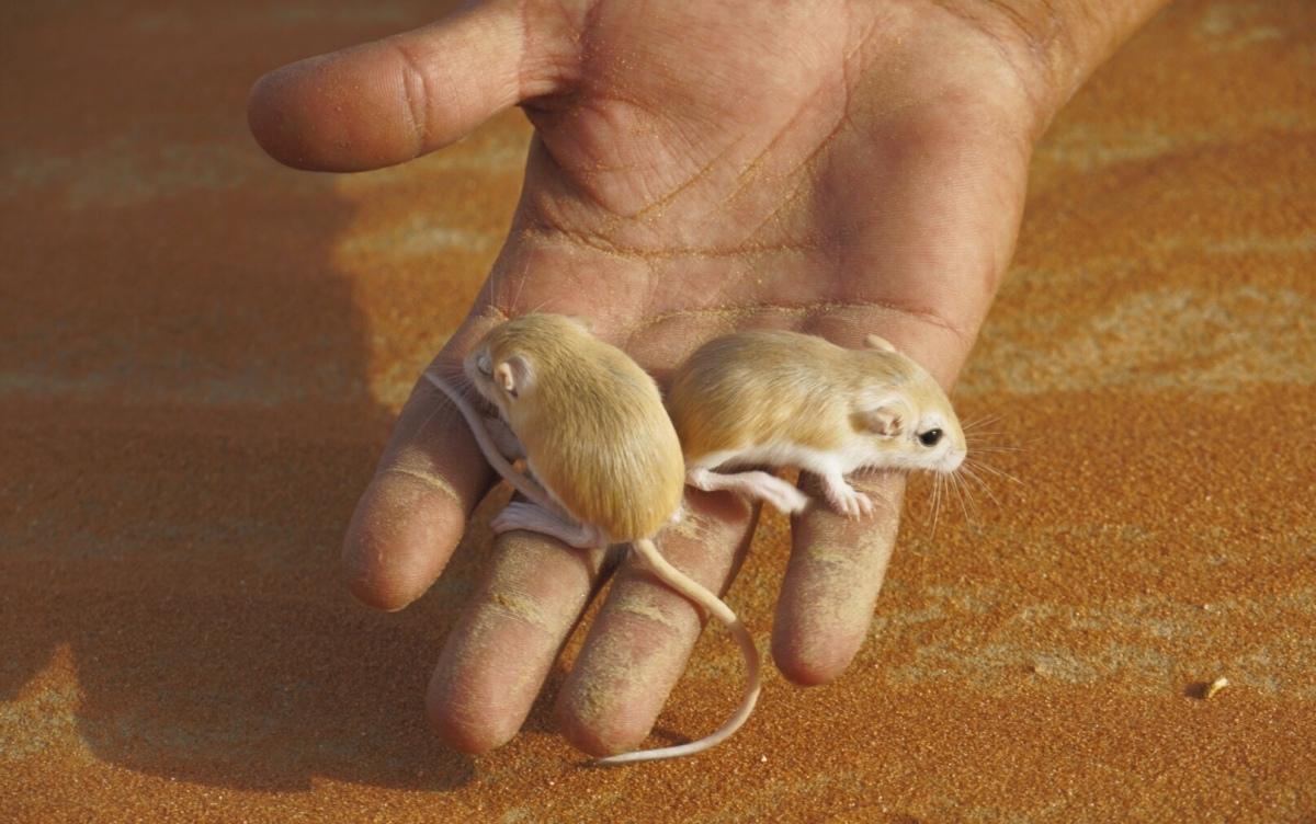 Tag 8: Rub Al-Khali - Von Mäusen und Menschen
