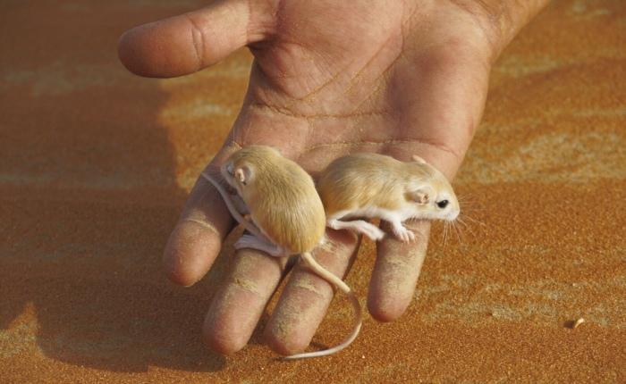 Tag 8: Rub Al-Khali – Von Mäusen undMenschen