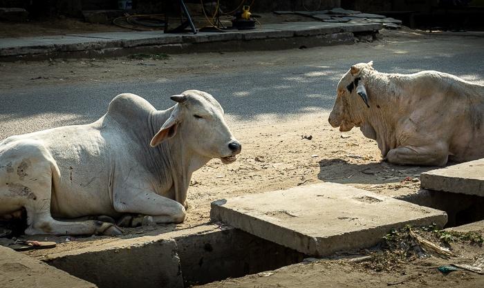 Tag 4: Von Delhi nachJaipur